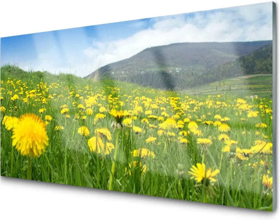 Akrylové obraz Pampeliška příroda
