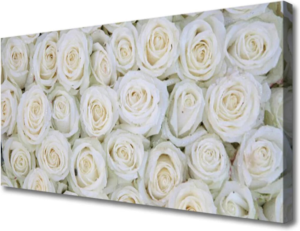 Obraz na plátně Růže květiny rostlina