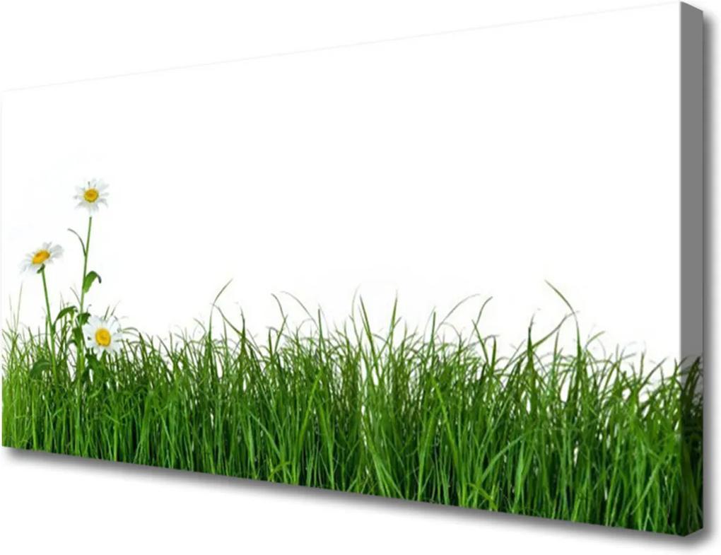 Obraz na plátně Burina Príroda Rastlina