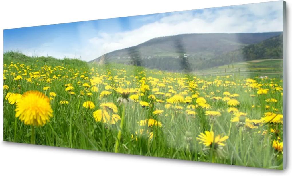 Obraz na akrylátovom skle púpava Príroda