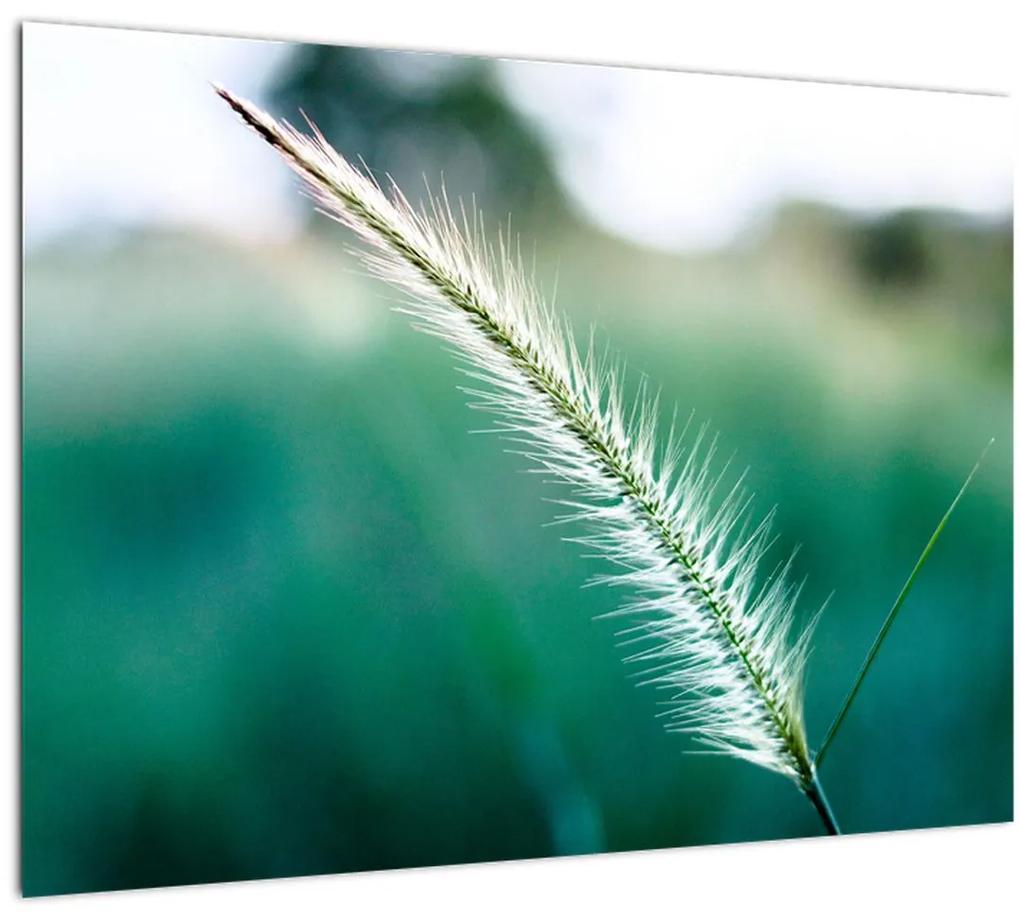 Obraz steblá trávy (70x50 cm), 40 ďalších rozmerov