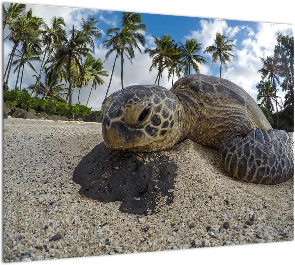 Obraz korytnačky (70x50 cm), 40 ďalších rozmerov