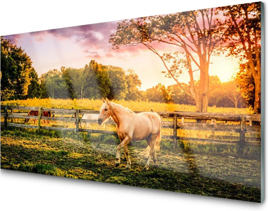 Akrylové obraz Kůň louka zvířata