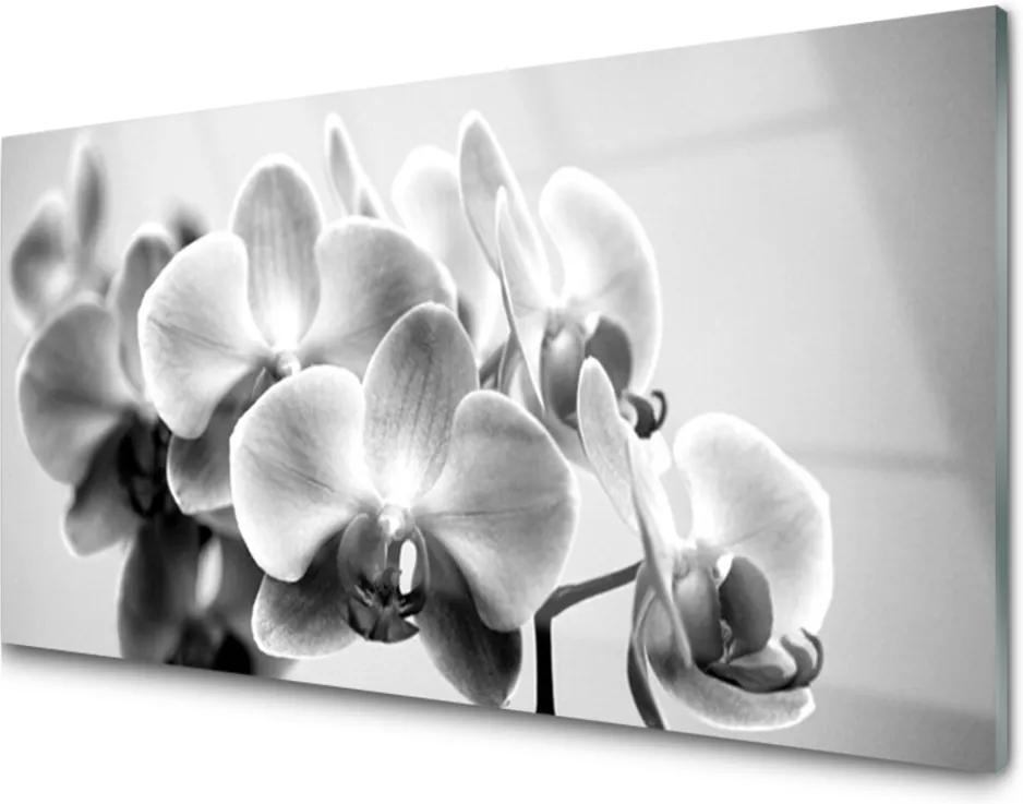 Obraz na skle Kvety Rastlina Príroda