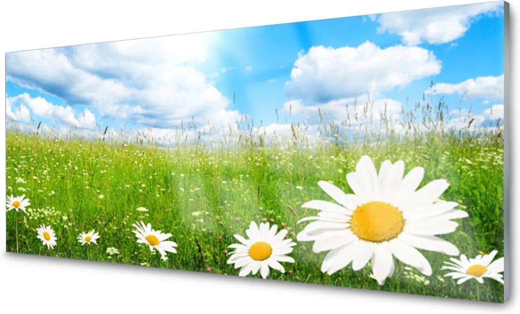 Akrylové obraz Sedmikráska tráva příroda