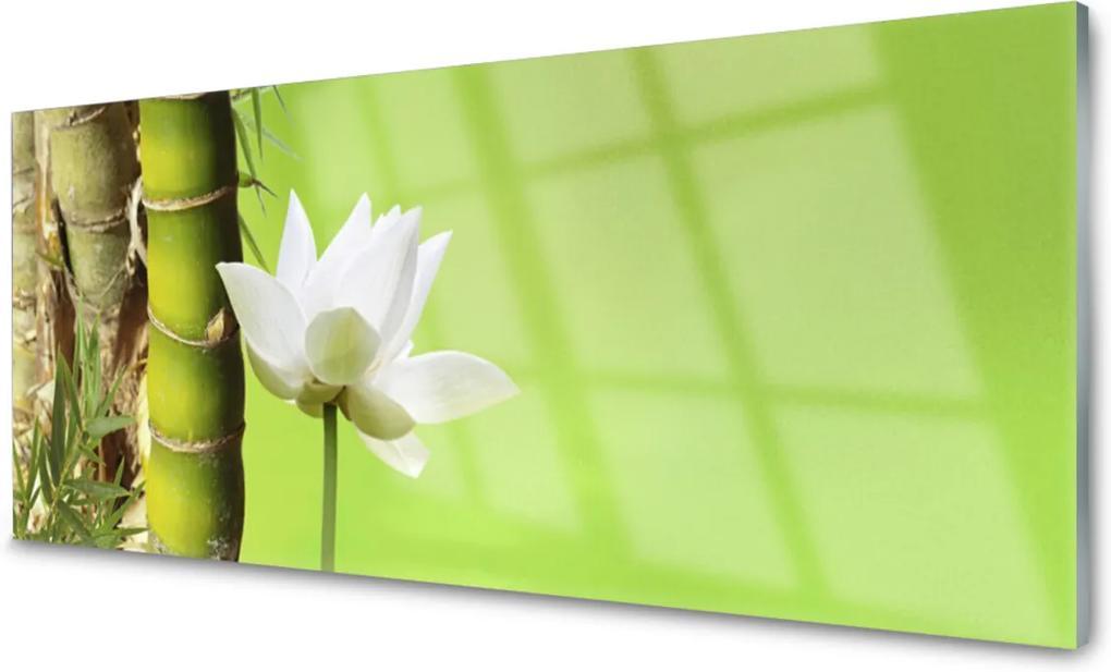 Obraz plexi Bambus Stonka Rastlina Príroda