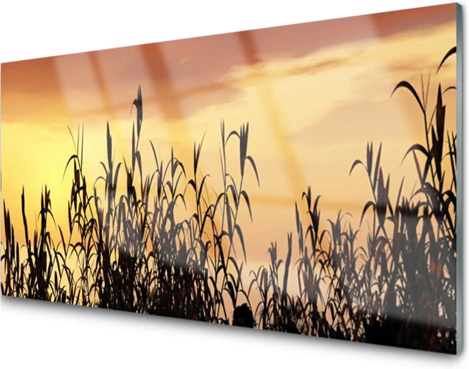 Skleněný obraz Listy západ louka pole