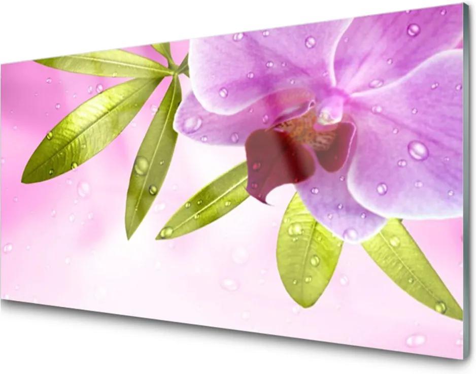 Obraz na skle Květ listy rostlina