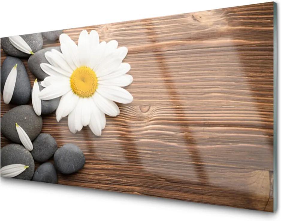 Skleněný obraz Sedmikráska kameny rostlina