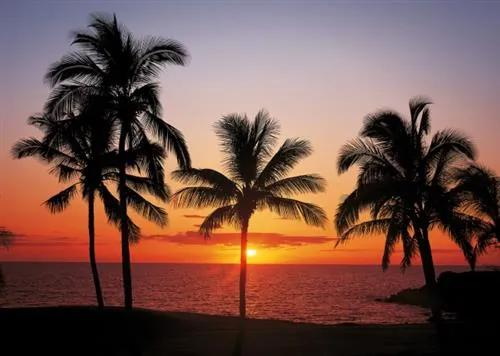Vliesové fototapety, rozmer 368 cm x 254 cm, Havaj, Sunny Decor SD307