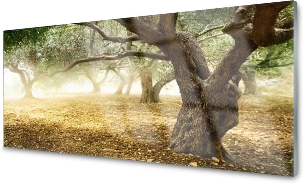 Obraz na akrylátovom skle Strom Tráva Príroda