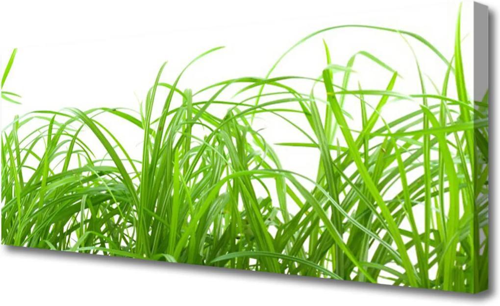 Obraz Canvas Tráva Rastlina Príroda