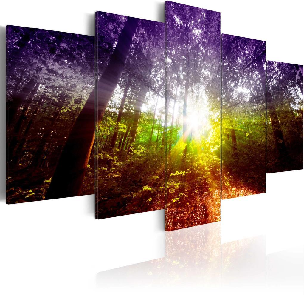 Obraz - Rainbow Forest 100x50