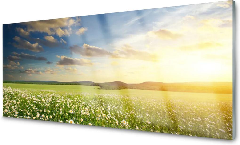 Skleněný obraz Louka květiny krajina