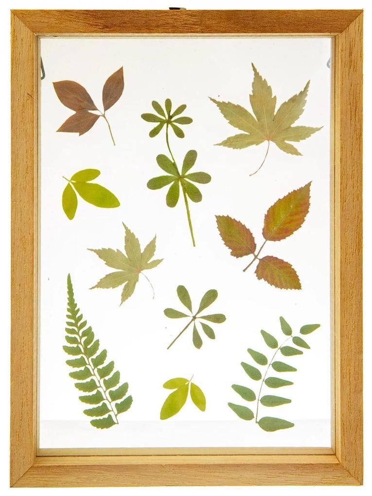 sass & belle Drevený rámček Herbarium Floating Leaves
