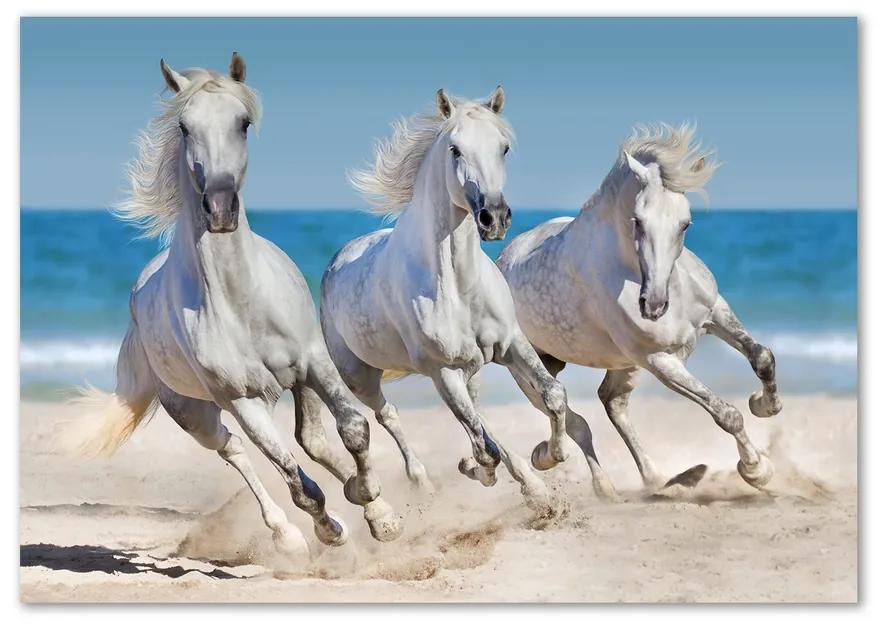 Foto-obraz na skle Biele kone pláž pl-osh-100x70-f-95257914