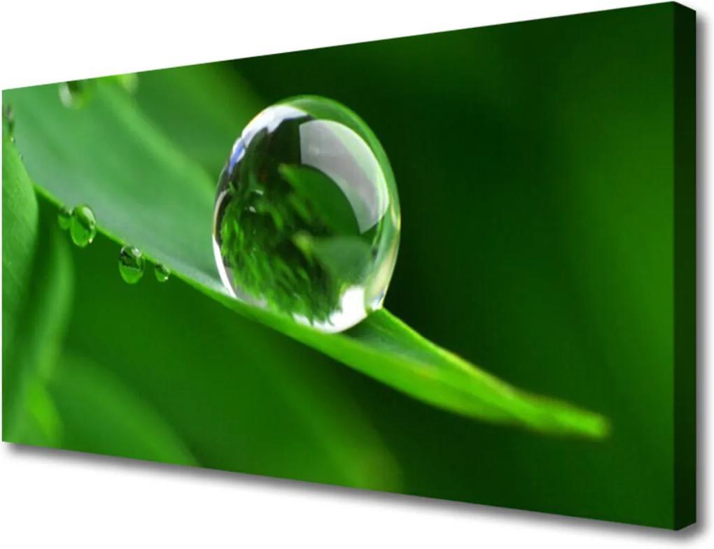 Obraz na plátně List Voda Kvapka Rastlina