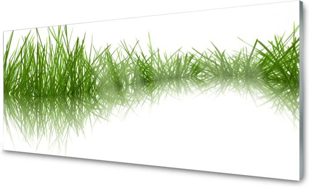 Skleněný obraz Tráva příroda rostlina