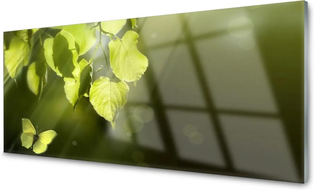 Skleněný obraz Listy Slnko Lúče