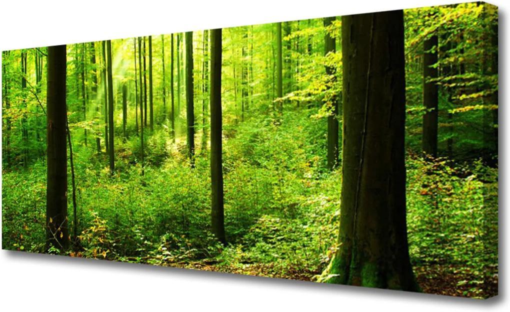 Obraz Canvas Les Zeleň Stromy Príroda
