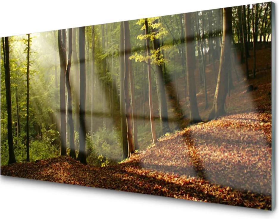 Skleněný obraz Les Stromy Príroda