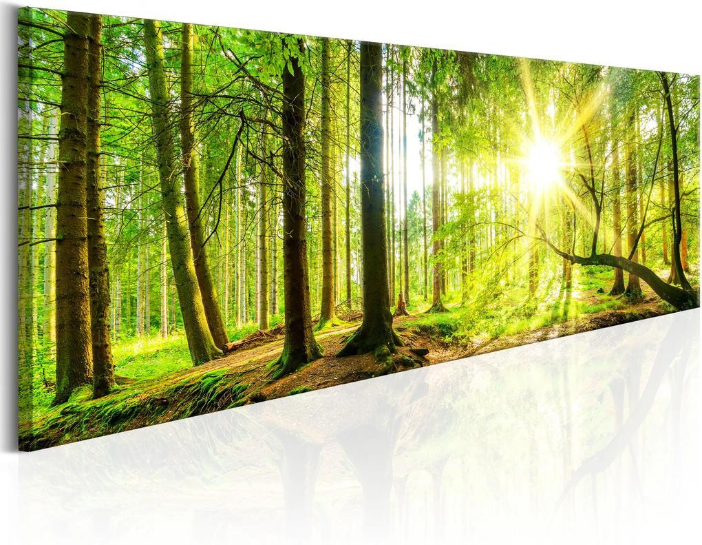 Obraz - Majestic Trees 120x40