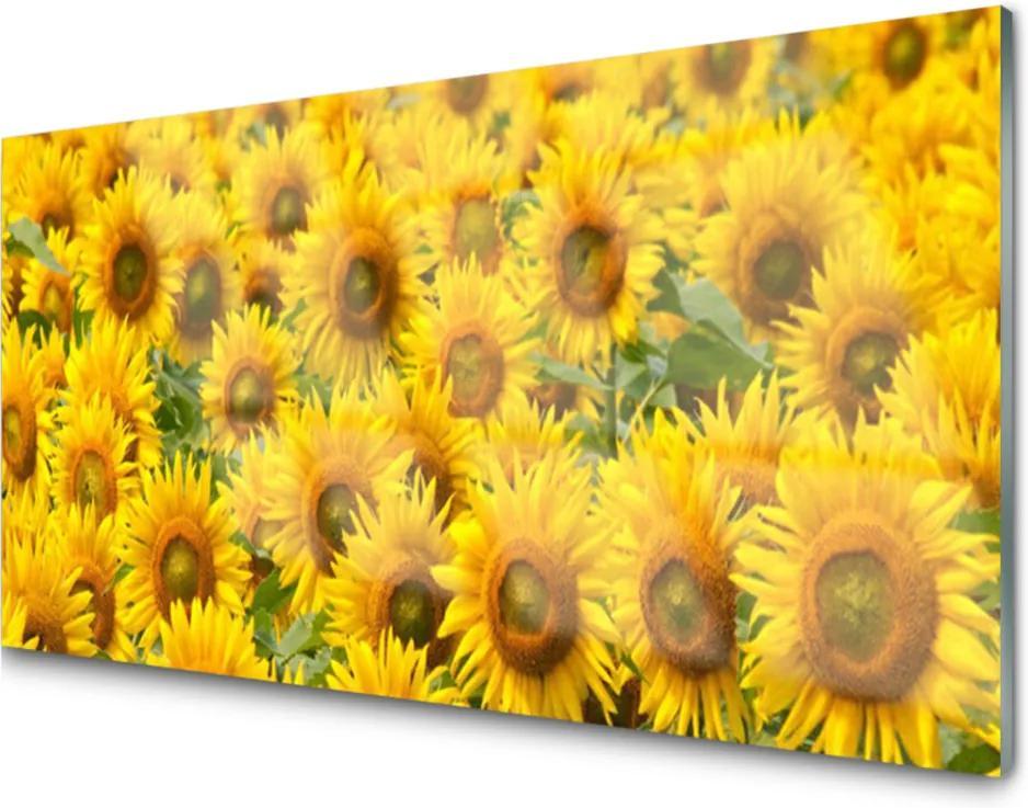 Obraz na skle Slunecznice rostlina