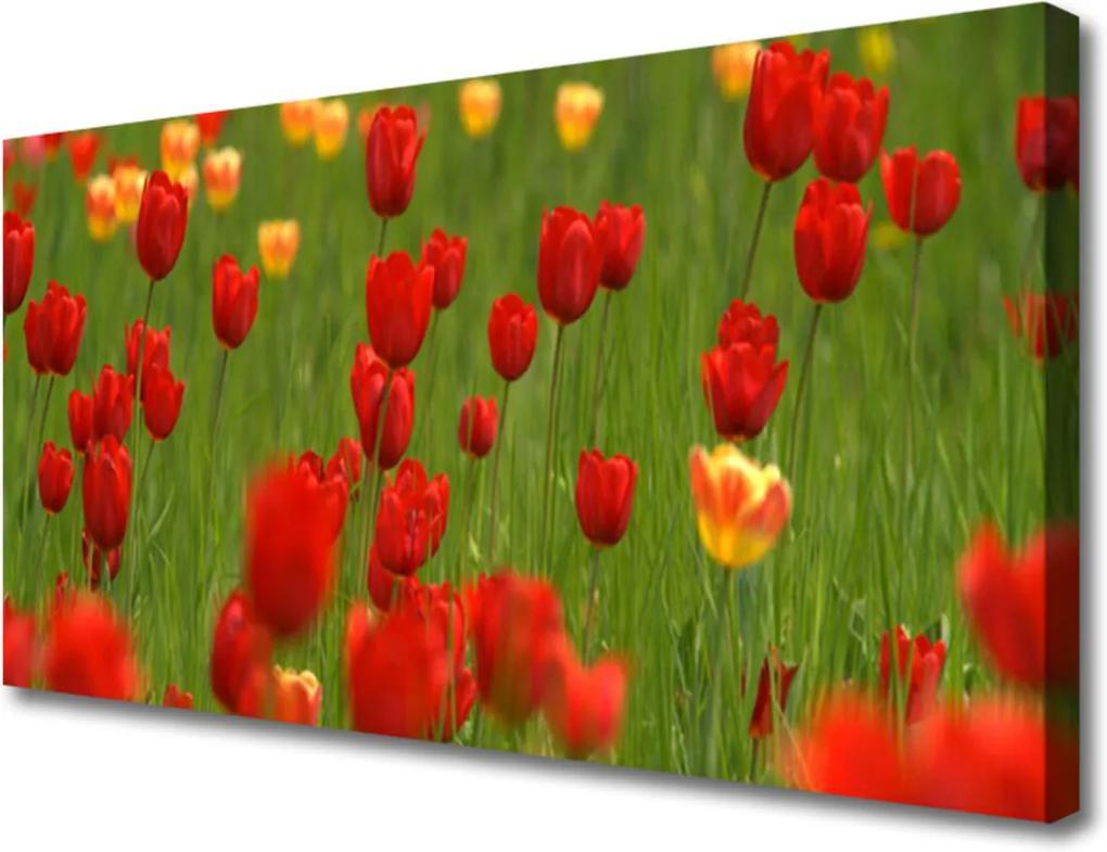 Obraz na plátně Sklenený Tulipány Rastlina