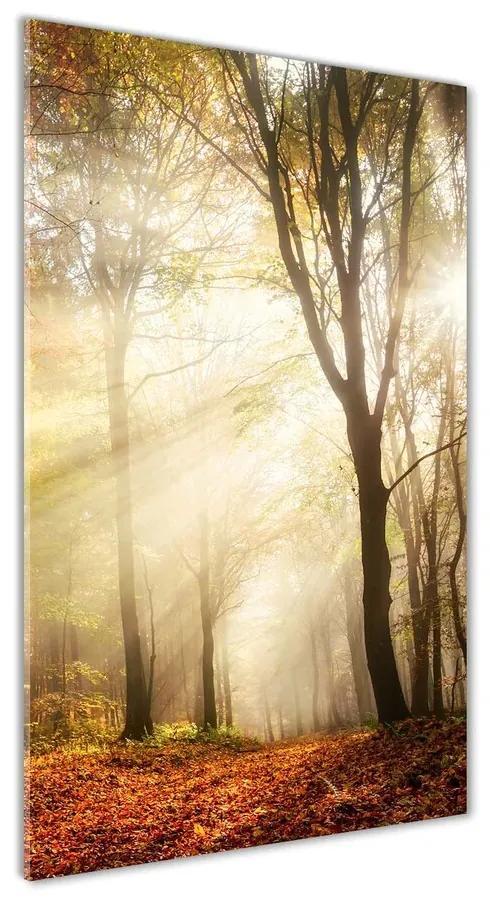Moderný akrylový fotoobraz Les na jeseň pl-oa-70x140-f-120624836