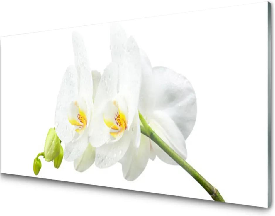 Obraz plexi Plátky Kvet Bíla Orchidea