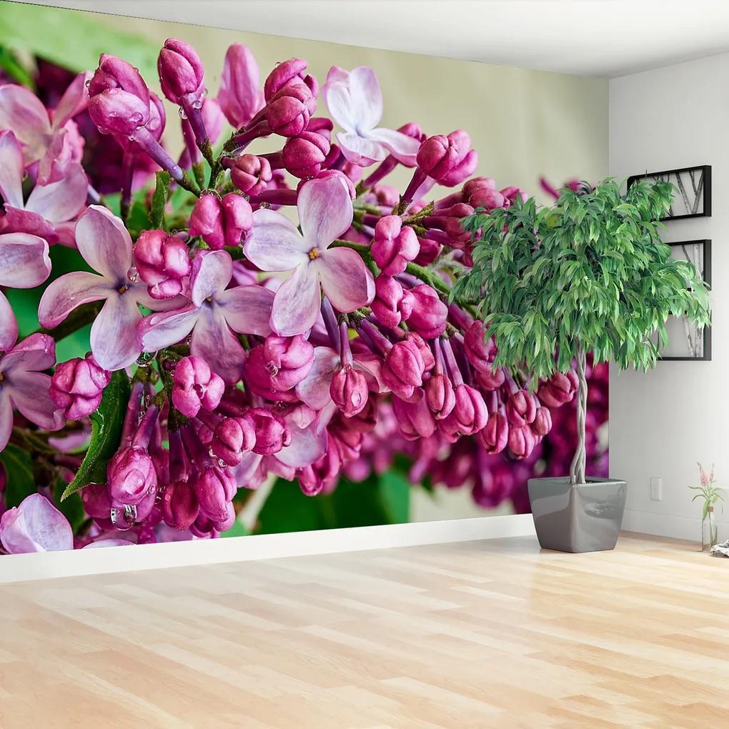 Fototapeta Růžové lilie