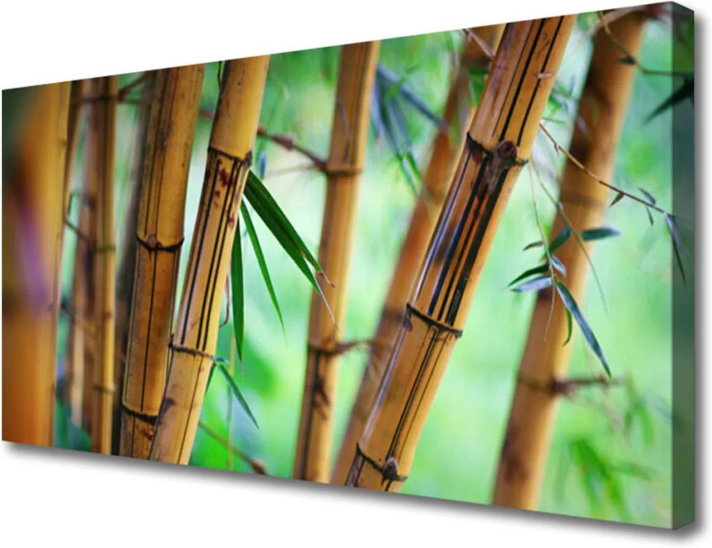 Obraz na plátně Bambus příroda rostlina