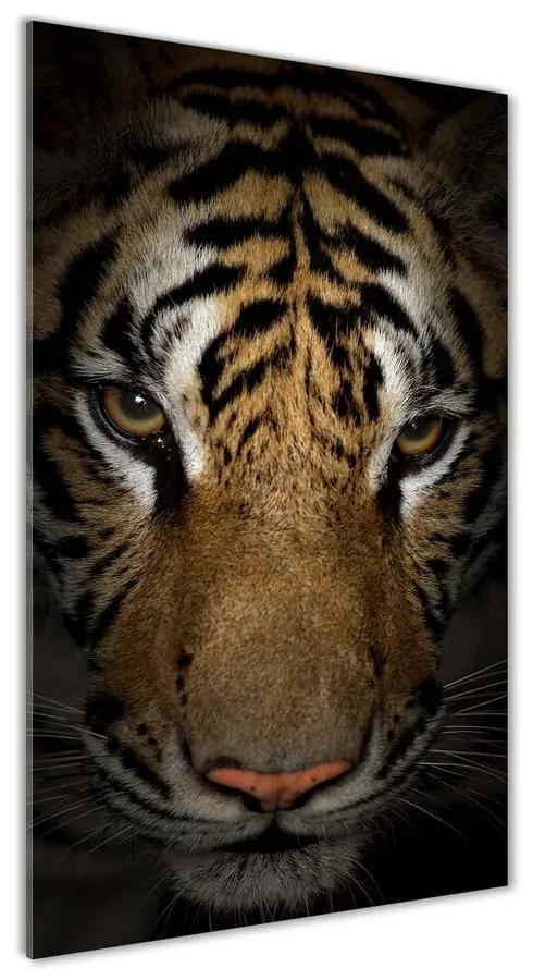 Foto obraz akrylové sklo Tiger pl-oa-70x140-f-69917271