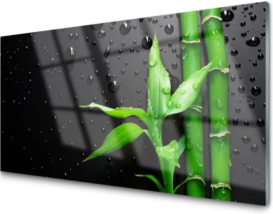 Obraz na skle Bambus listy rostlina
