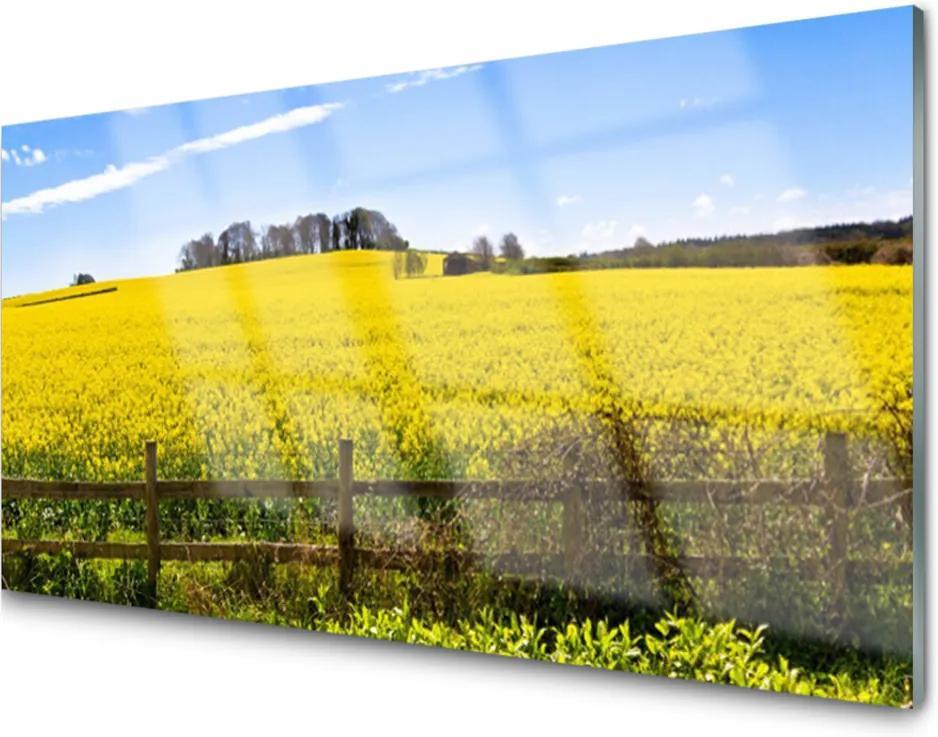 Skleněný obraz Pole Rostlina Krajina