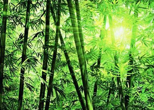 Fototapety, rozmer 366 x 254 cm, Bamboo Forest, W+G 123