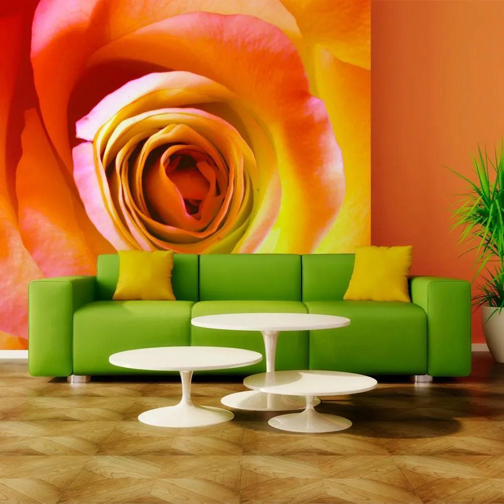 Fototapeta - Desert rose 200x154