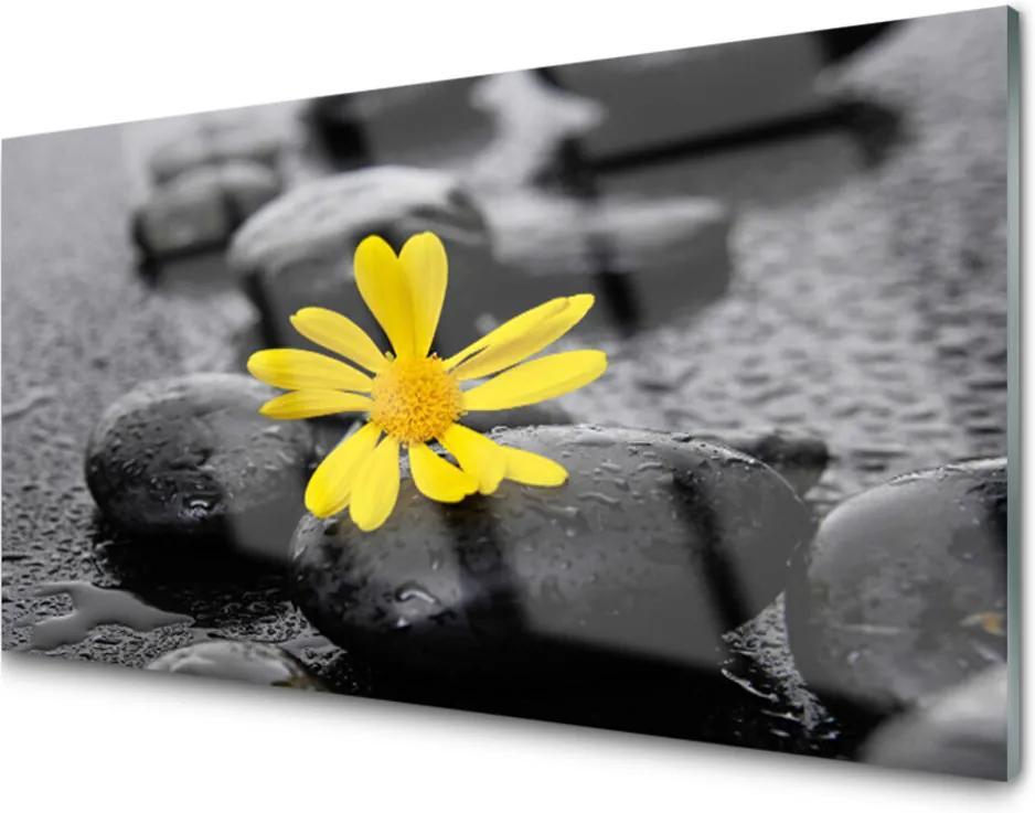 Plexisklo obraz Květ kameny rostlina lázně