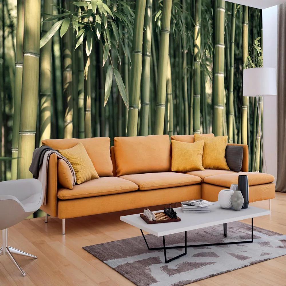 Fototapeta - Bamboo Exotic 200x140