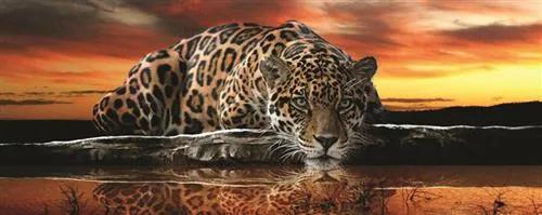 Vliesové fototapety, rozmer 250 x 100 cm, jaguár, IMPOL TRADE 126VE