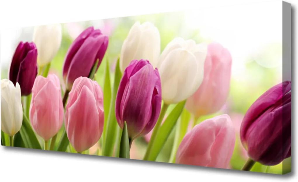 Obraz Canvas Tulipány Kvety Príroda Lúka