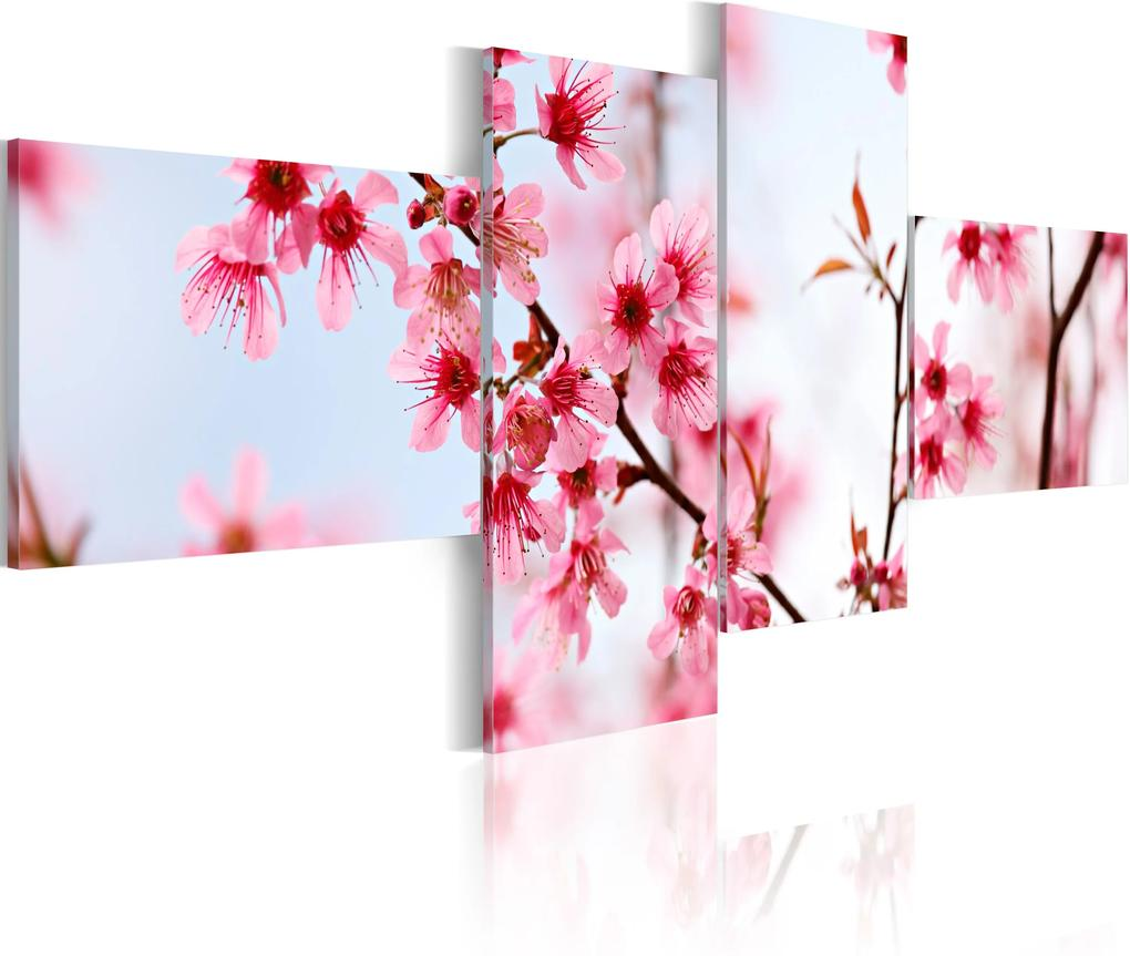 Obraz - Beauty of the cherry flowers 100x45
