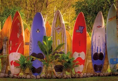 Fototapety, rozmer 368 x 254 cm, surfy, Komar 8-902