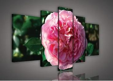 Obraz na plátne viacdielny - OB2556 - Ružový kvet 170cm x 100cm - S4A
