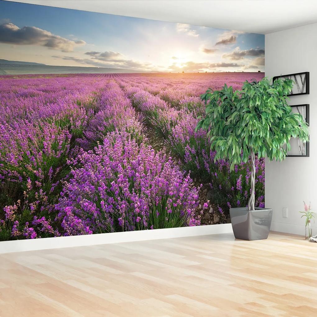 Fototapeta Lavender louka