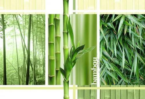 Vliesové fototapety, rozmer 312 x 219 cm, bambus, IMPOL TRADE 2-180VE