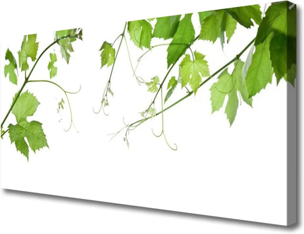 Obraz Canvas Vetvy Listy Príroda Kvety