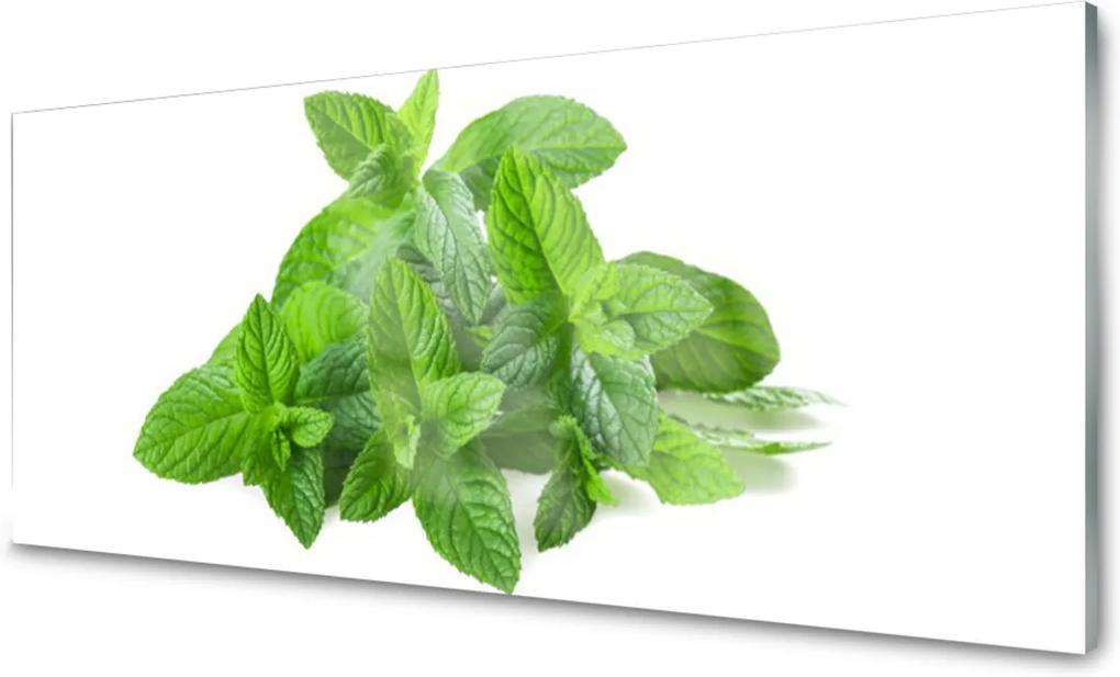 Plexisklo obraz Máta rostlina příroda