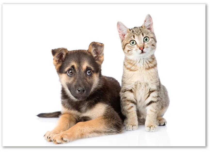 Foto-obraz na skle horizontálne Pes a mačka pl-osh-100x70-f-94452483