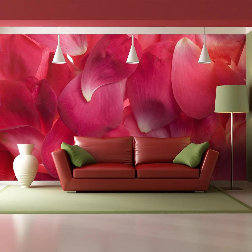 Fototapeta - Pink rose petals 200x154